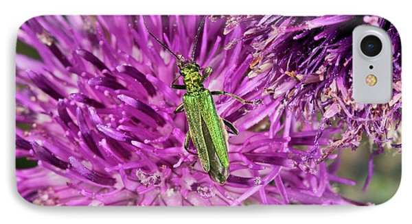 Thick-legged Flower Beetle On Knapweed IPhone Case by Bob Gibbons