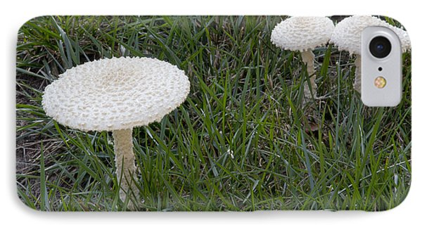 Thiers Lepidella Mushrooms IPhone Case
