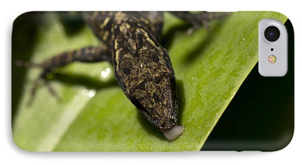 IPhone Case featuring the photograph Thirsty Brown Anole by Meg Rousher