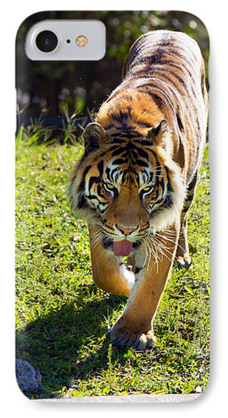 Thirsty Tiger IPhone Case