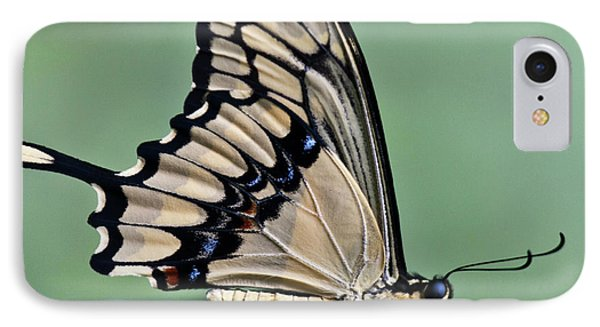 Thoas Swallowtail Butterfly IPhone Case by Heiko Koehrer-Wagner