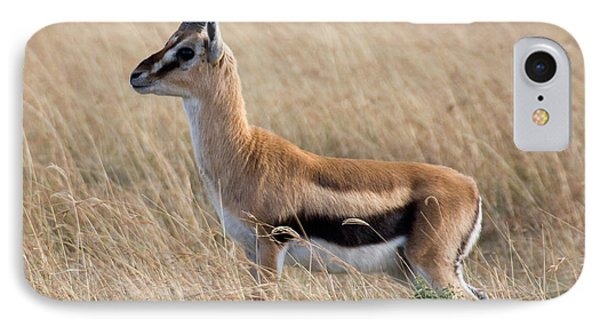 IPhone Case featuring the photograph Thompson's Gazelle by Chris Scroggins