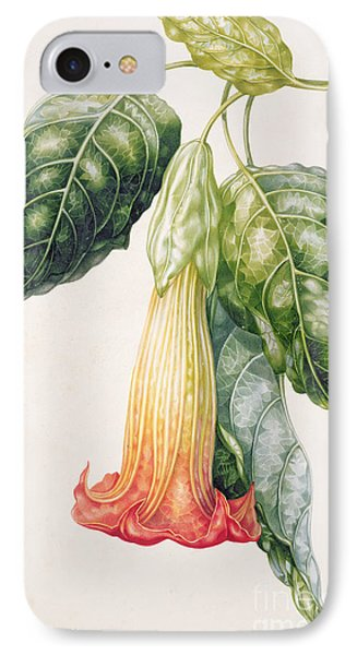 Thorn Apple Flower From Ecuador Datura Rosei IPhone Case by Augusta Innes Withers