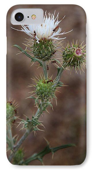 Thorny Wild Flower IPhone Case by Joseph G Holland