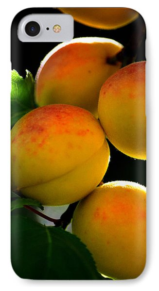 Those Glowing Golden Apricots Phone Case by Susanne Still