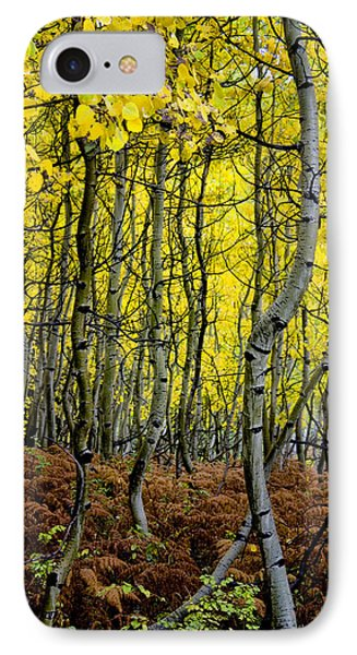 IPhone Case featuring the photograph Through The Aspen Forest by Ellen Heaverlo