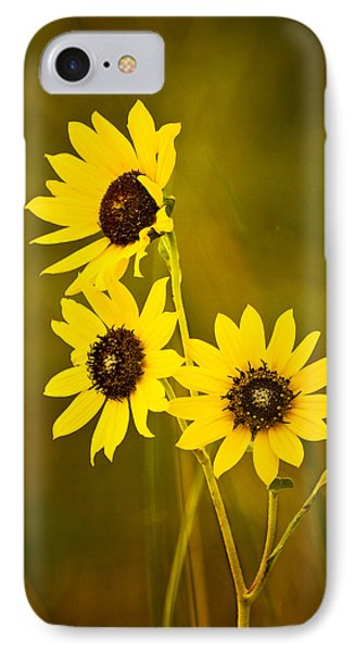 A Trio Of Black Eyed Susans IPhone Case by Gary Slawsky