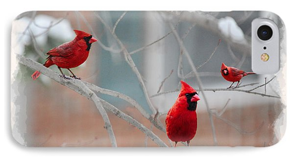 Three Cardinals In A Tree Phone Case by Dan Friend