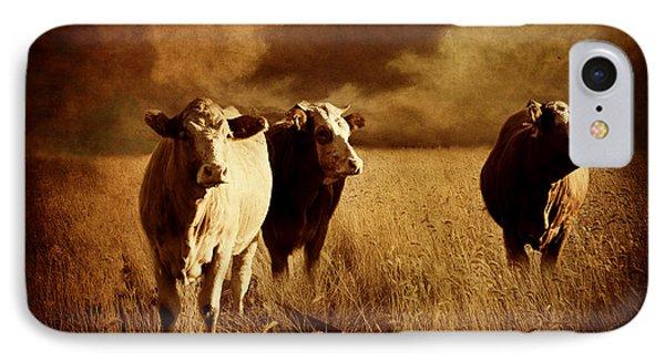 Three Cows IPhone Case