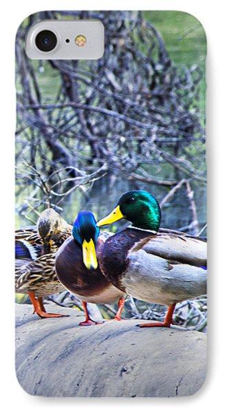 Three Ducks On A Log IPhone Case by Joseph Hollingsworth