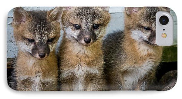 Three Fox Kits Phone Case by Paul Freidlund