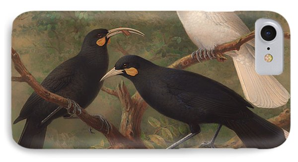 Three Huia  IPhone Case by Mountain Dreams