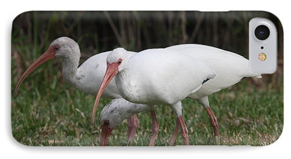Three Ibis Together IPhone Case by Christiane Schulze Art And Photography