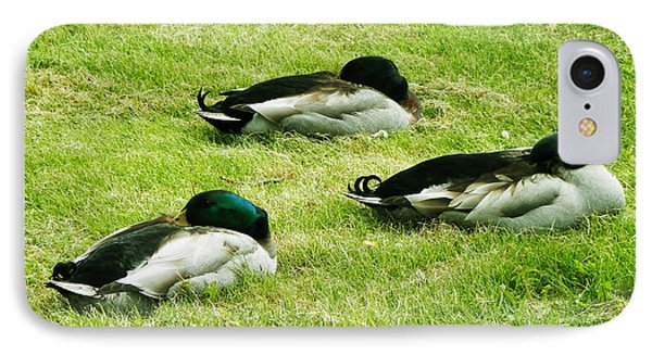 IPhone Case featuring the photograph Three Napping Ducks  by Zinvolle Art