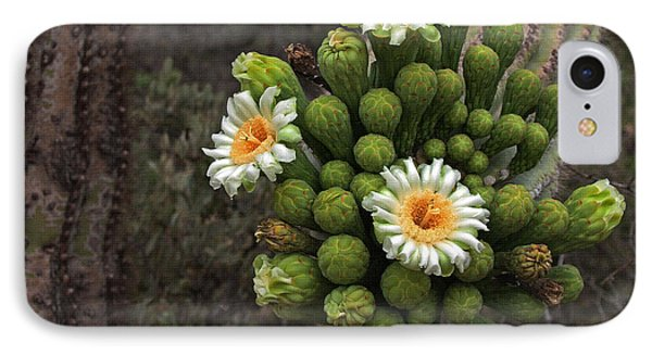 Three Saguaro Blossoms And Many Buds IPhone Case by Tom Janca
