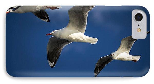 Three Silver Gulls In Flight Phone Case by Avalon Fine Art Photography