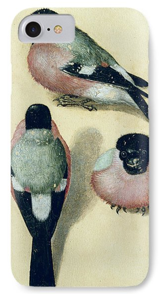Three Studies Of A Bullfinch IPhone 7 Case