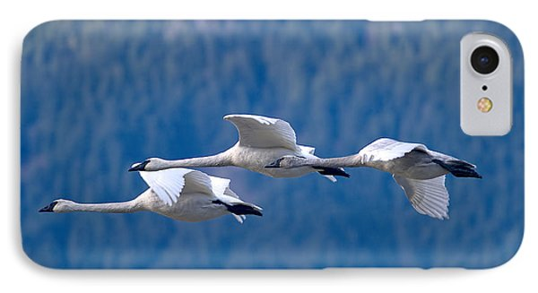 Three Swans Flying IPhone Case by Sharon Talson