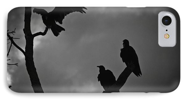 Three Vultures IPhone Case by Bradley R Youngberg
