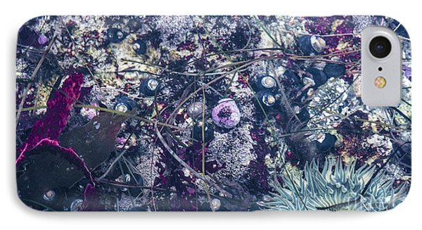 IPhone Case featuring the mixed media Tidal Pool Assortment by Terry Rowe
