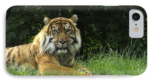 IPhone Case featuring the photograph Tiger At Rest by Lingfai Leung