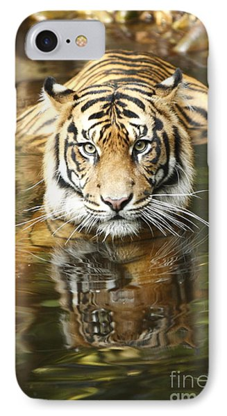 Tiger IPhone Case by Craig Dingle