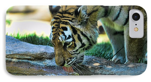 Tiger Drinking Water Phone Case by Paul Ward