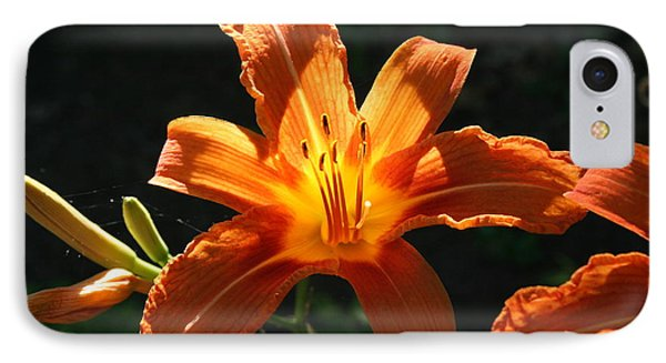 Tiger Lily 1 IPhone Case by Jim Gillen