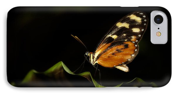 IPhone Case featuring the photograph Tiger Monarch Butterfly by Zoe Ferrie