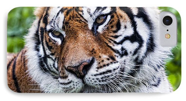 Tiger On Grass IPhone Case by Goyo Ambrosio
