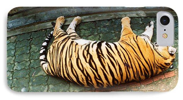 Tiger Panthera Tigris Sleeping IPhone Case