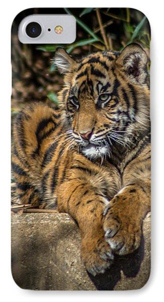 Tiger IPhone Case by Randy Scherkenbach