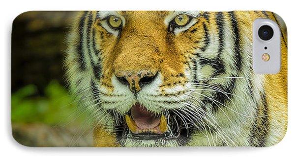 Tiger Stare Phone Case by LeeAnn McLaneGoetz McLaneGoetzStudioLLCcom