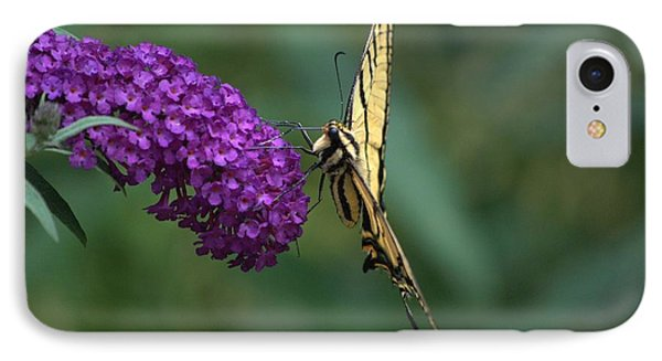 Tiger Swallowtail Butterfly IPhone Case by Michael Dohnalek