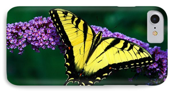Tiger Swallowtail Butterfly On Blooming IPhone Case