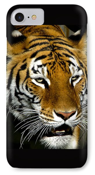 Tiger Tiger Burning Bright IPhone Case by Venetia Featherstone-Witty