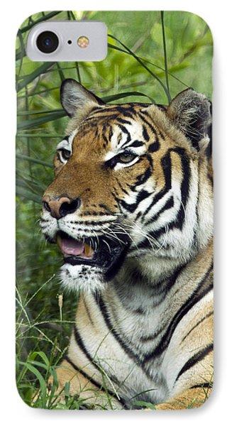 Tiger5 IPhone Case