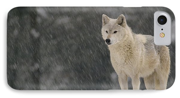 Timber Wolf Female North America IPhone Case by Gerry Ellis