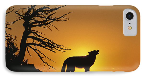 Timber Wolf Howling IPhone Case by Alan & Sandy Carey