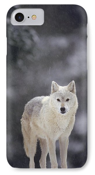 Timber Wolf In Falling Snow IPhone Case by Gerry Ellis
