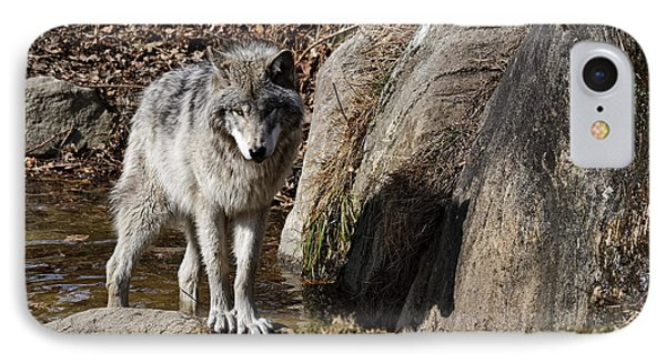 IPhone Case featuring the photograph Timber Wolf In Pond by Wolves Only