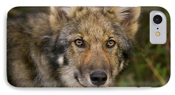 Timber Wolf In Denali IPhone Case by Yva Momatiuk John Eastcott