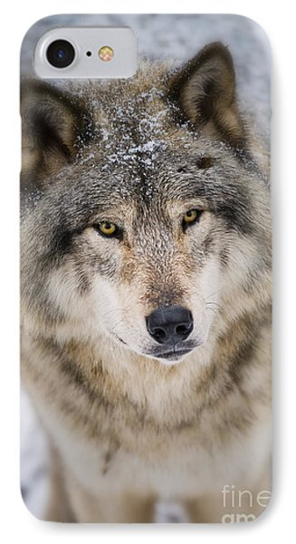 Timber Wolf Pictures 254 IPhone Case