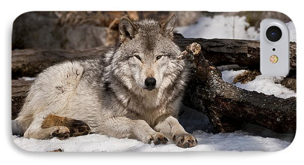 Timber Wolf Pictures 776 Phone Case by World Wildlife Photography