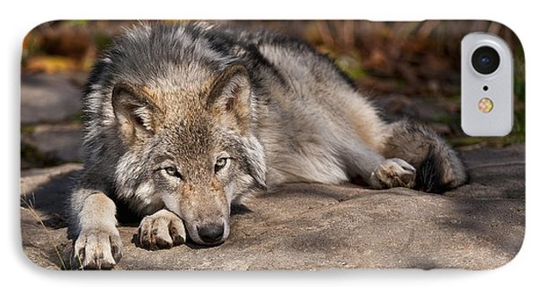 Timber Wolf Pictures 945 Phone Case by World Wildlife Photography