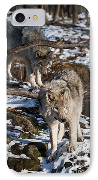 Timber Wolf Pictures 957 Phone Case by World Wildlife Photography