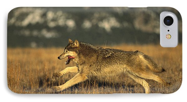 Timber Wolf  Running IPhone Case by Konrad Wothe