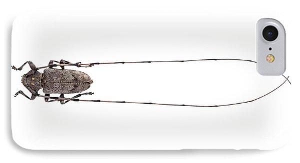 Timberman Beetle IPhone Case