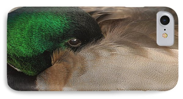 IPhone Case featuring the photograph Time For A Nap by Sabine Edrissi