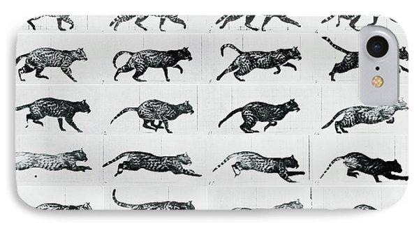 Time Lapse Motion Study Cat Monochrome  IPhone Case